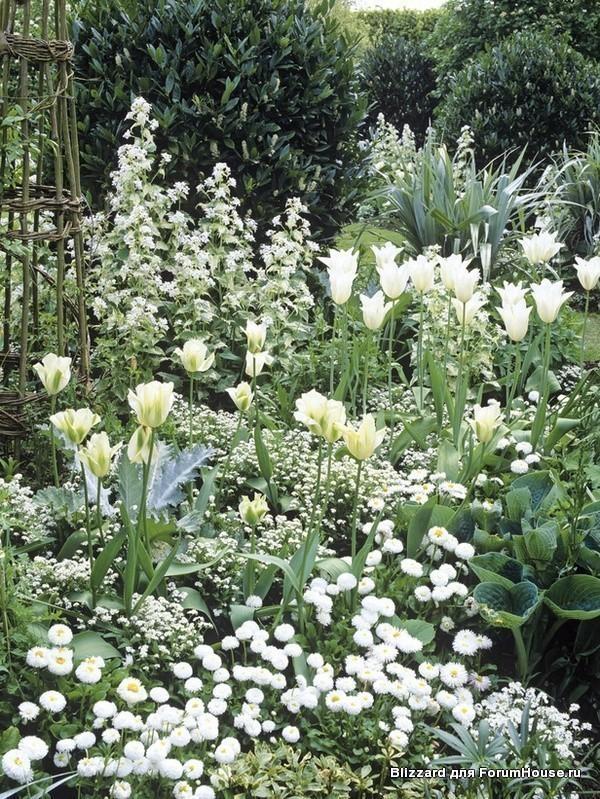 Монохромный сад
