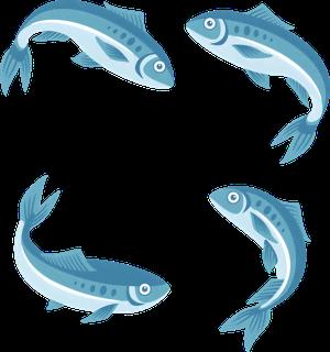 От карасей до стерляди – как развести рыбу в дачном пруду