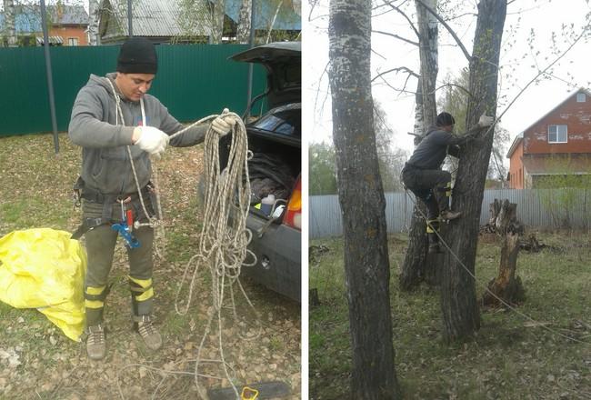 Этап 1 - Подготовка участка. Валим крупные деревья за 7000 руб